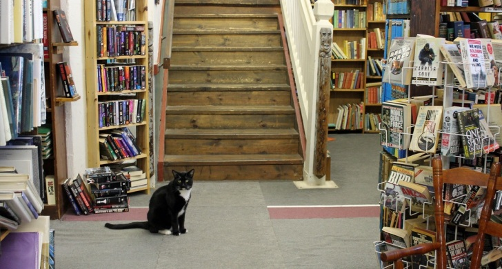 bookstorecat