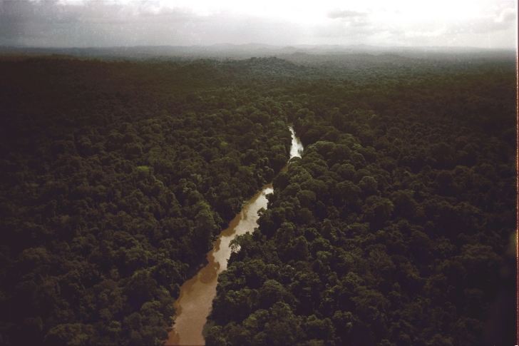 The jungle surrounding Jonestown.