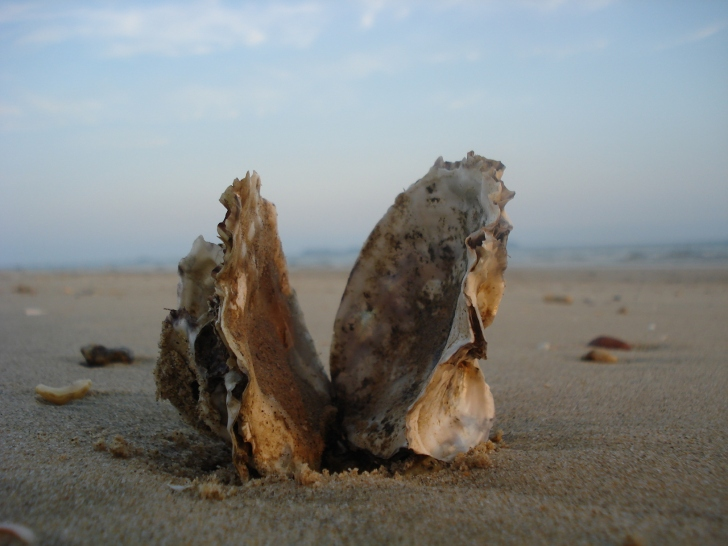 Photo: Oyster Shell // Ivan Walsh