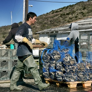 Drake's Bay Oystermen // Miwok // Flickr CC License