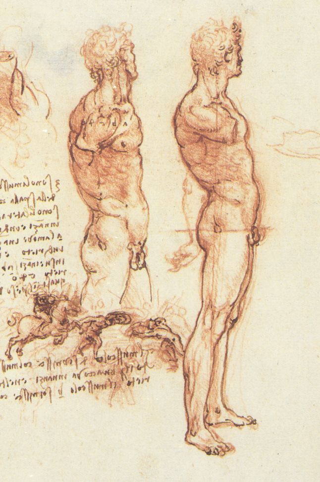 Anatomy of a Male Nude (c. 1504 - 1506), drawing by Leonardo da Vinci.