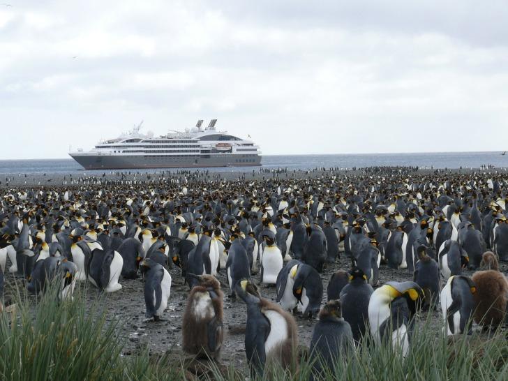 antarctica penguins cc0 (pixabay)
