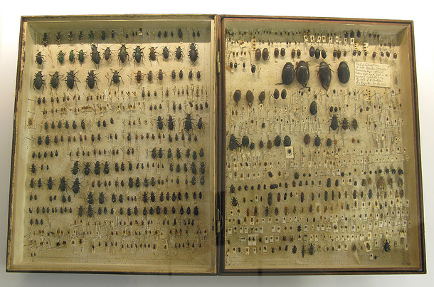 darwin's' beetle box final