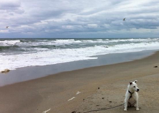 Belle Krendl at the beach.