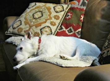 Richard's rescue dog, Belle Krendl.
