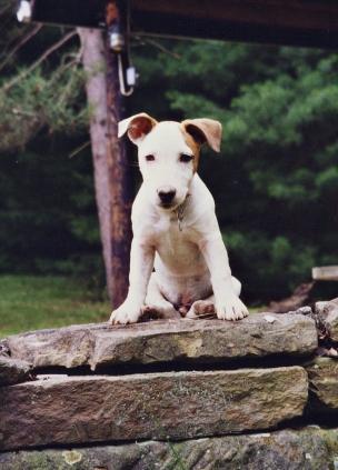 Jack Gilbert, Richard's previous dog.