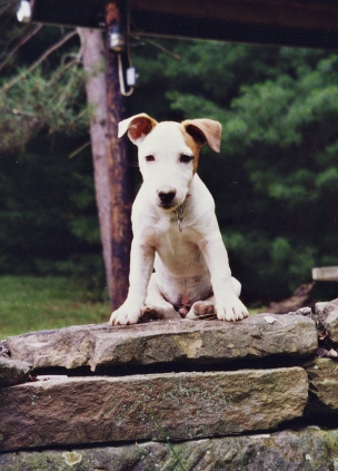 Jack Gilbert, Richard's previous dog.