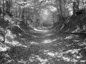 In the Village Creek State Park in Arkansas,  a portion of the Trail of Tears remains. (Photo: Thomas R Machnitzki/desaturated/CC BY 3.0)