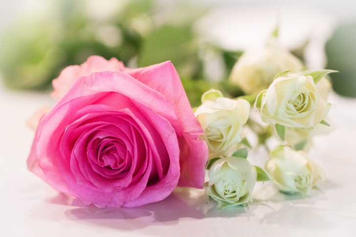 a pink rose surrounded by smaller white roses