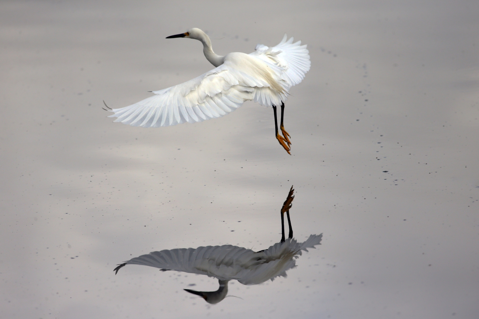 white heron symbolism A white heron is a short story by sarah orne jewett first published by houghton, mifflin and company in 1886, it was soon collected as the title story in jewett's anthology a white heron and other stories.
