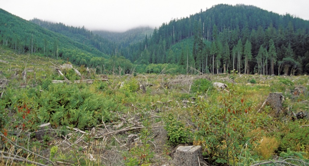 Clearcut fields on the Quinault Indian Reservation