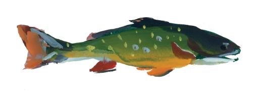 fish-mi-brookie-1.jpg