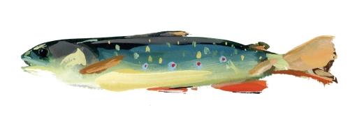 fish-mi-brookie2.jpg