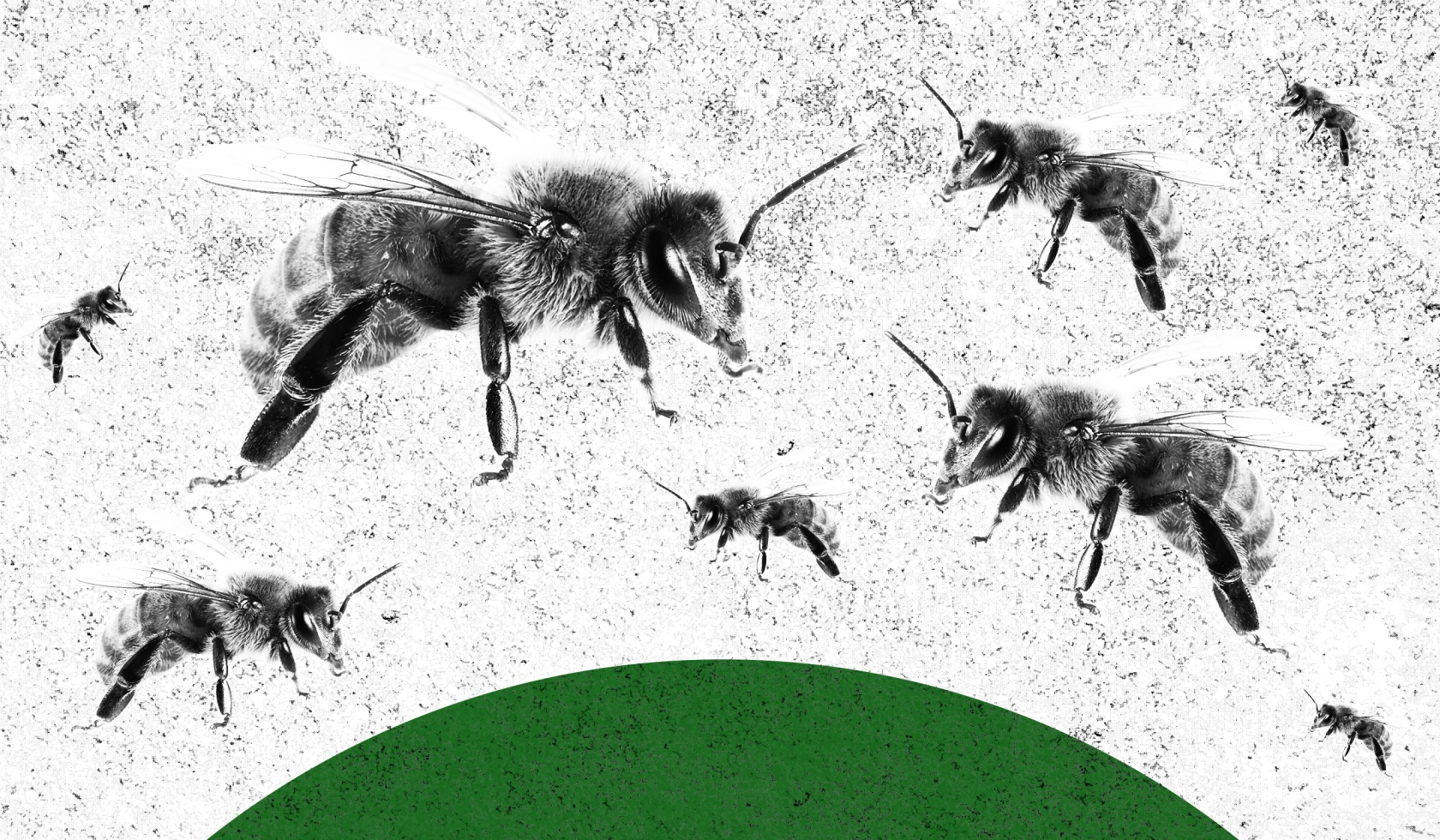 Honey Bees, Worker Bees, and the Economic Violence of Land Grabs