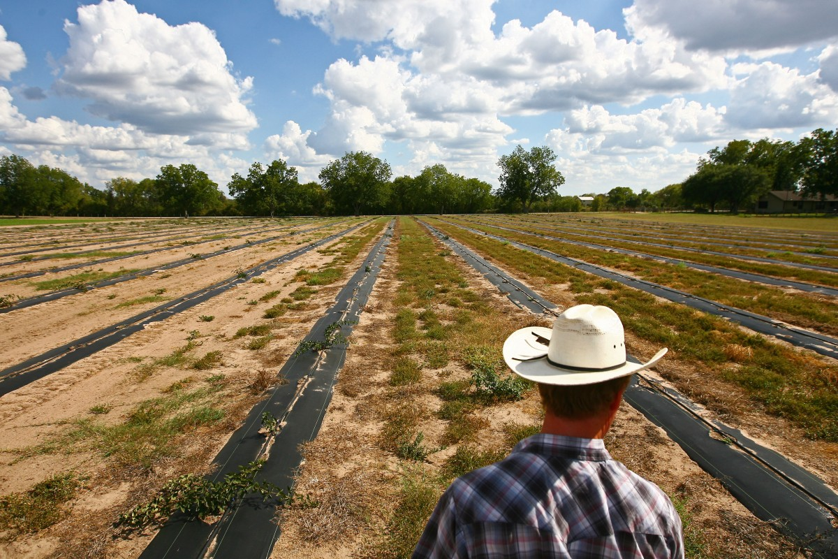 Betting the Farm on the Drought