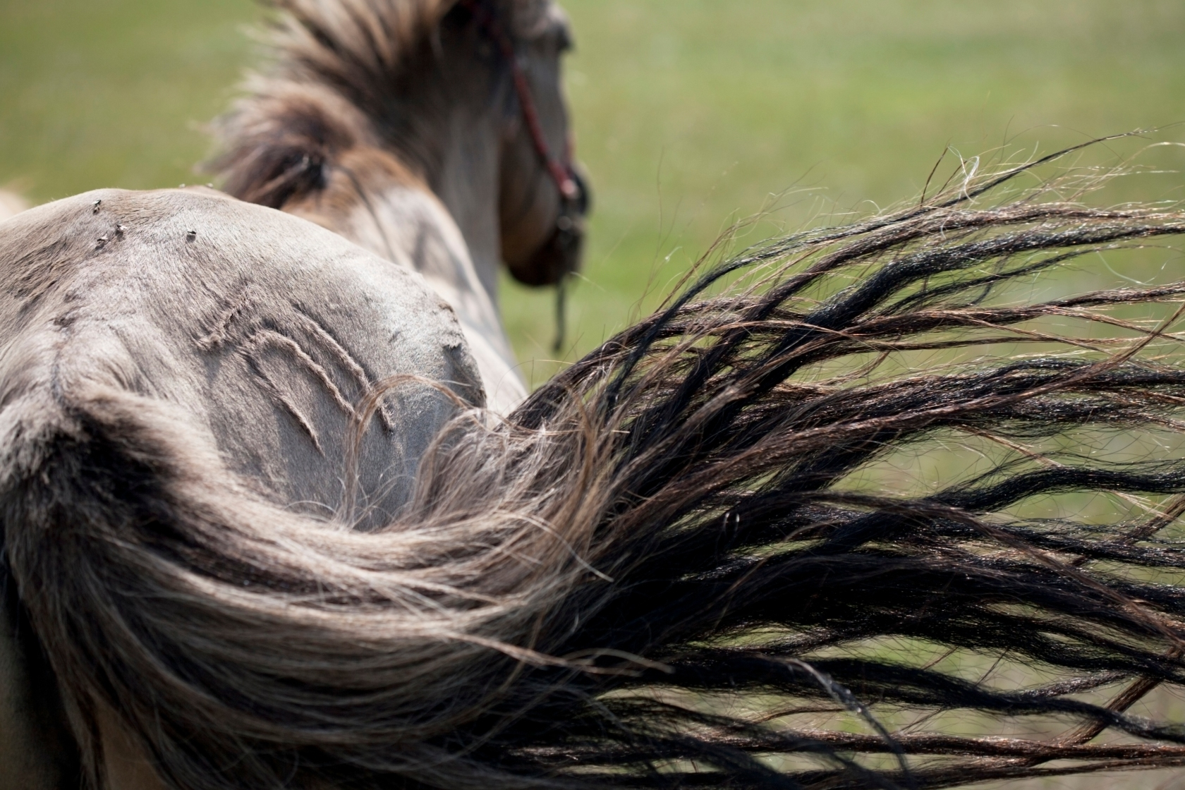 I Entered the World's Longest, Loneliest Horse Race on a