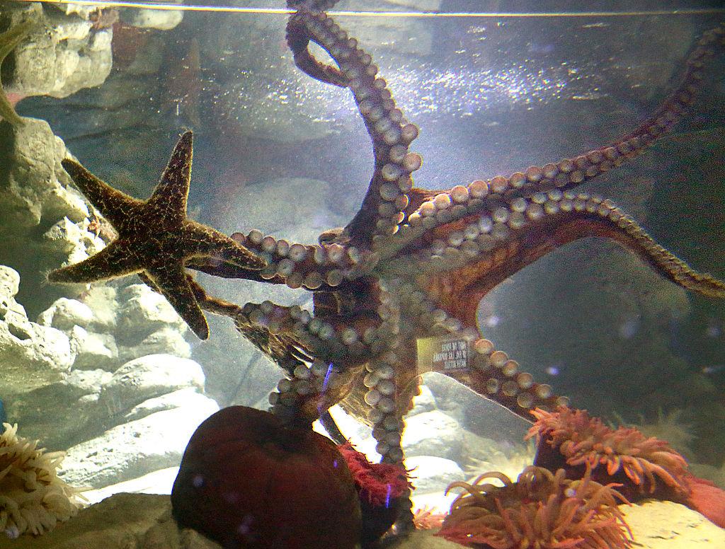 The Octopus' Branding Makeover: From Devil-Fish to Brilliant Invertebrate