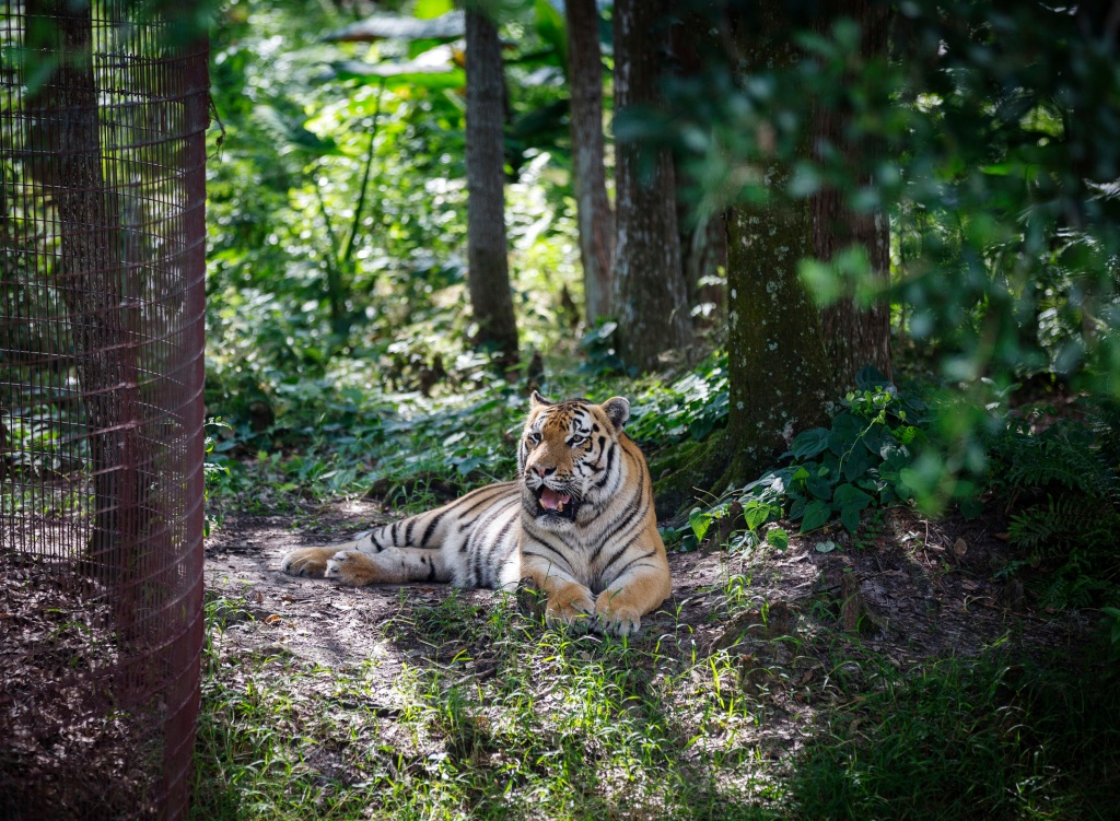 The Strange And Dangerous World Of America S Big Cat People