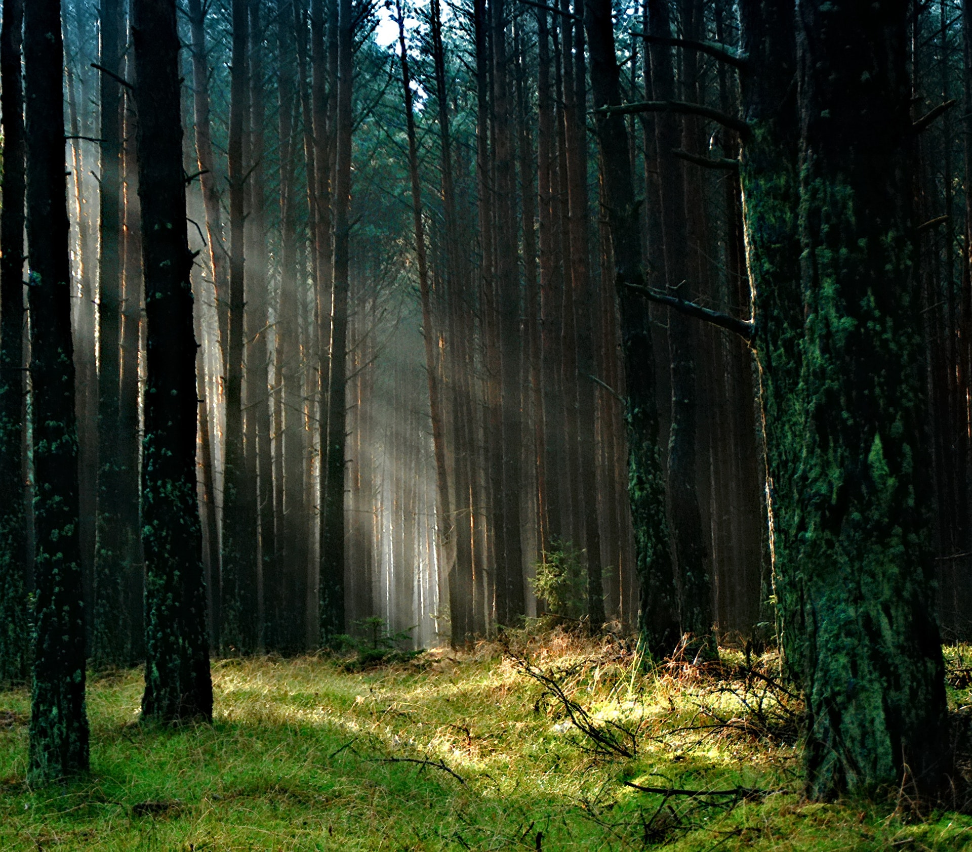'Anyone Can Walk in the Woods, But Who Truly Knows Them?'